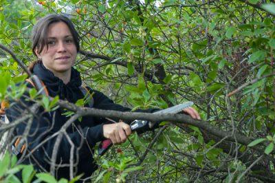 Francesca cuts off a branch